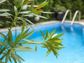 comment éviter les feuilles dans le bassin avec le filet anti feuilles